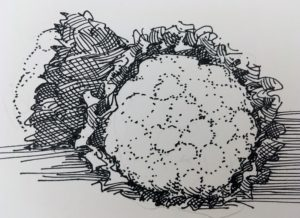 pen and ink cauliflower